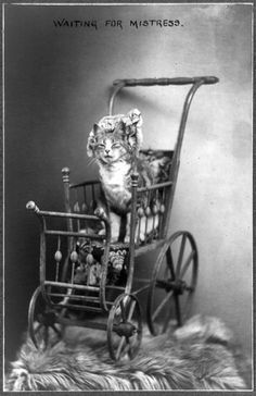 A Portrait of a Kitten Cat in a Vintage Baby Carriage Buggy, Waiting for Mistress by Beverly & Pack, via Flickr