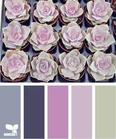 Desert Rose: Blue Gray, Charcoal Grey, Mauve Pink, Pale Periwinkle and Sage Green