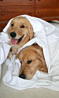 We're making sure these sheets smell like us. The humans will appreciate that, right?