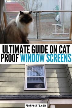 This is the ultimate guide on cat proof window screens |  Cat Proof Window Treatments | Cat Proof Window | Cat Proof Screen Door | Cat Window Screen | Cat Proof Home Tips #catproofwindowscreens #catproofhometips #cattips Cat Apartment, Diy Cat Bed, How To Cat, Living With Cats, Cat Window, Cat Care Tips, Window Screens, Cat Room, Pet Safe