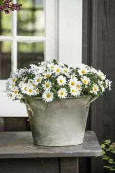 Rustic and shabby ~ daisies