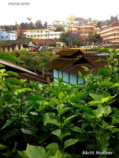 I am in love with Shillong