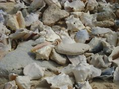 grand turk conch graveyard - to the right of pier, through the dufry shop and almost to the point