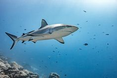Perfect fish by Julia Wimmerlin / Wildlife Photography, Photography Camera, Natural Life, All Art, Lightroom, Shark, Fish, Artist, Animals