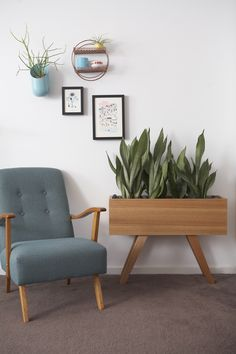 Blake Planter with Sanseveria great indoor plant