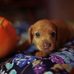 so so teenie-tiny (AND adorable!)