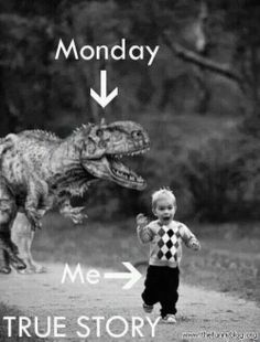 The Random Vibez gets you the best collection of Funny Monday Memes which expresses it all. Get into the mood for the week with these Awesome Monday Memes! Funny Stuff, Funny Drunk, Drunk Texts, Funny Monday Memes, Monday Quotes, Funny Memes, Funny Quotes, Friday Memes, True Stories