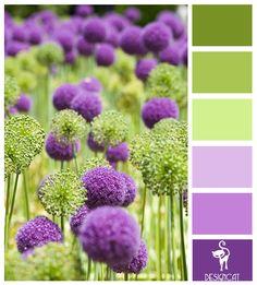 ❤ =^..^= ❤  Purple & Green Alliums: Purple, Lilac, Pastel, Green, Apple - Colour Inspiration Pallet