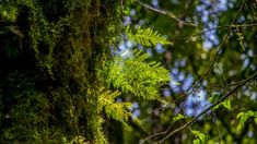 forest - Google Search Google Search, Plants, Plant, Planets