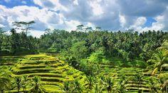 Sidemen - A deux heures d'Ubud, dans une région parmi les plus belles de Bali, le petit village de Sidemen est un îlot de nature à l'état pur entouré de somptueuses rizières et du Mont Agung. Voyage Bali, Destination Voyage, Attraction, Ubud, Destinations, Les Cascades, Lombok, Bali Travel, Belleza Natural