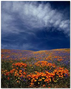 Springtime announces itself with vibrant colors and the fragrance of new flowers. This is the promise of renewal. Champs, Beautiful World, Beautiful Places, Beautiful Scenery, Field Of Dreams, Nature Pictures, Natural Wonders, Beautiful Landscapes, The Great Outdoors