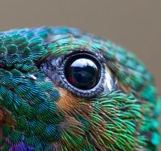 Beautiful Macro Photo of a Hummingbird's Details