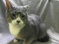 Please save Charles doomed to die at ACC shelter in New York City URGENT visit pets on death row on Facebook.