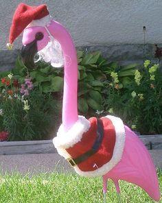 Crazy Pink Flamingo on Pinterest | Flamingos, Pink Flamingos and ...