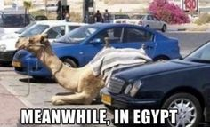 Meanwhile, in Egypt...