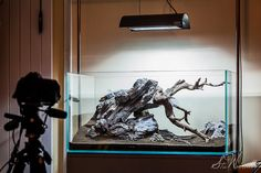 New 90x45x45cm aquascape design by Stu Worrall Photography, via Flickr