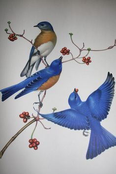 Vintage Menaboni Eastern Bluebird Print by emanolis on Etsy