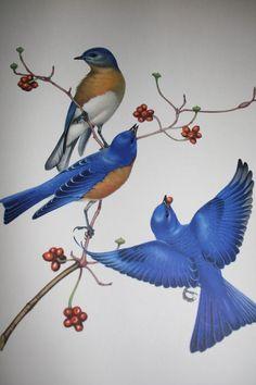 Bluebirds!