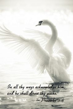 beautiful swan and verse
