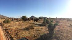 Ostriches, Cheetahs, Crocodiles, Hyena, Leopards, Zebras, Animal Kingdom, Lions, Adventure Travel