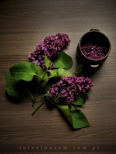www.interlunium.com.pl lilac #moon #newmoon #lilac #personalblog #photography #nature #naturelife #naturallife #wood #forestlife #natural #flower #tree #flowers #witch #witchy