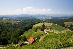 Weingut Wohlmuth Südsteiermark Sauvignon Blanc, Central Europe, The Republic, Capital City, Homeland, Alps, Beautiful Landscapes, Austria, Dolores Park