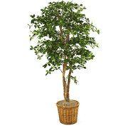 Olive Tree In Planter - Walmart.com