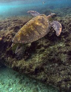 Snorkeling with sea turtles in Xiao Liu Qiu