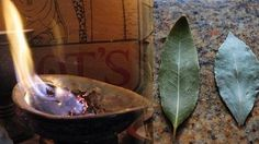 The bay leaf, also known under its scientific name, Laurus nobilis, is a leaf from the bay laurel tree.
