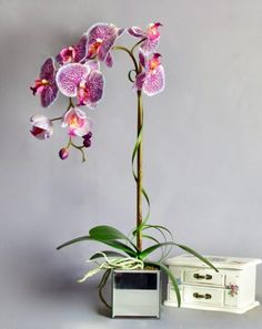 Artificial Purple Orchid in mirror cube Artificial Orchids, Artificial Flower Arrangements, Purple Orchids, Cube, Glass Vase, Mirror, Luxury, Plants, Handmade