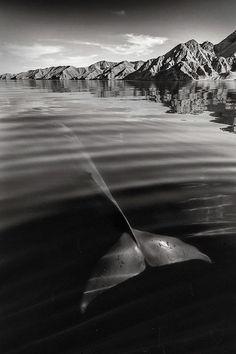 25년간 고래의 아름다움을 쫓아 바다를 누빈 사진작가