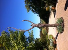 """The sculpture goddess at DeLoach Vineyards in Sonoma, CA.  DeLoach is considered """"one to watch"""" for Pinot Noir and is a winery included in the Boisset Wine Living at Home collection of wines for wine tasting."""