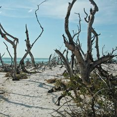 Cayo Costa State Park in Captiva, Florida is #10 on Thrillist's list of The 25 Best State Parks in America You Absolutely Must Visit!