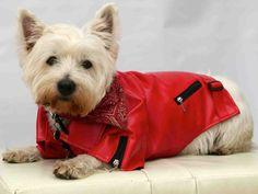 Dog Leather Look Biker Jacket - Red - SidsStuff.com