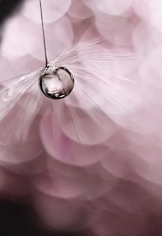~Single droplet