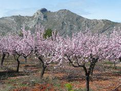almond-blossom.jpg (3072×2304)