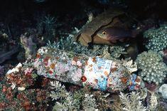 Hier zie je gewoon een vis die langs plastic zwemt, omdat de zee zo vervuilt is