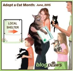 Adopt A Cat - Any Cat! - Dolly the Doxie
