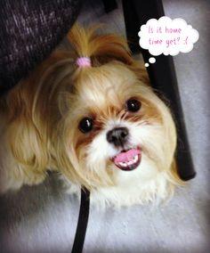 Millie's Obedience School Diaries: Week Two