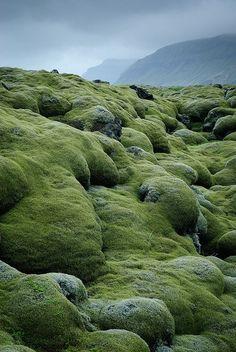 lava fields covered with moss in Vestur-Skaftafellssysla, Iceland