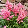 Astilbe - Astilbe needs consistently moist soil to thrive, so it's a good choice for areas that don't drain well.  Shade.  Perennial. Deer resistant.