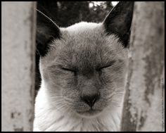 Merlin our blind cat.