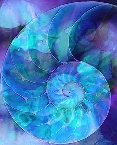 Blue Nautilus Shell By Sharon Cummings