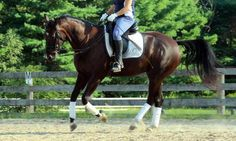 How to Ride Your Excited Horse In 5 Easy Steps | Horse Listening
