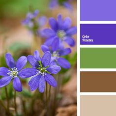Rich shades of violet-blue blend perfectly with noble green and brown. As this palette is dark enough, use these colors in a well-lit room..