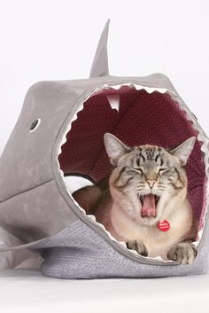 Cat Ball for Shark Week a Unique Cat Bed by The Cat Ball #thecatball #catball #uniquecatbed #lolcat #funnycat #catcave #sharkweek #shark #catfurniture #catbed http://www.thecatball.com