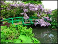 Monet's wisteria-covered bridge at Giverny, France in May
