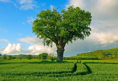 I want to sit under this tree right now! Pretty sunny day in a field out in the middle of nowhere