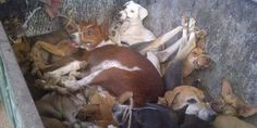 HELP SAVE DOGS OF INDIA! ANIMAL CRUELTY IS WRONG