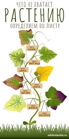 Landscape Design, Garden Design, Diy Greenhouse, Nature Plants, Green Plants, Growing Vegetables, Geraniums, Hydroponics, Horticulture